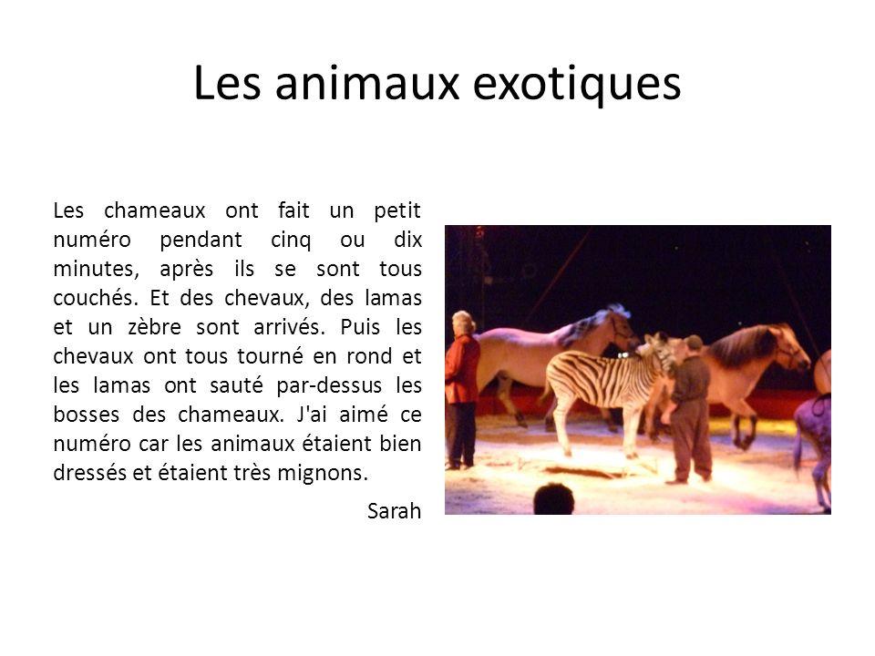 Les animaux exotiques Les chameaux ont fait un petit numéro pendant cinq ou dix minutes, après ils se sont tous couchés. Et des chevaux, des lamas et