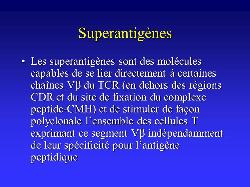 Superantigènes Les superantigènes sont des molécules capables de se lier directement à certaines chaînes V du TCR (en dehors des régions CDR et du sit