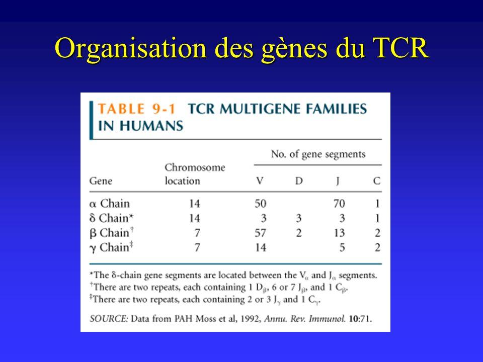 Organisation des gènes du TCR