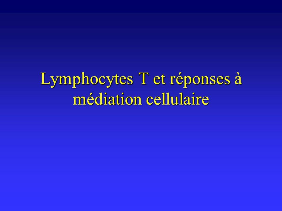 Réponses lymphocytaires T Deux types de réponses après interaction avec lantigène en périphérieDeux types de réponses après interaction avec lantigène en périphérie –différenciation auxiliaire (lymphocytes CD4 + ) sécrétion de cytokines et expression membranaire de ligands favorisant lactivation dautres types cellulairessécrétion de cytokines et expression membranaire de ligands favorisant lactivation dautres types cellulaires –lymphocytes B, lymphocytes T cytotoxiques, macrophages, cellules NK, etc.