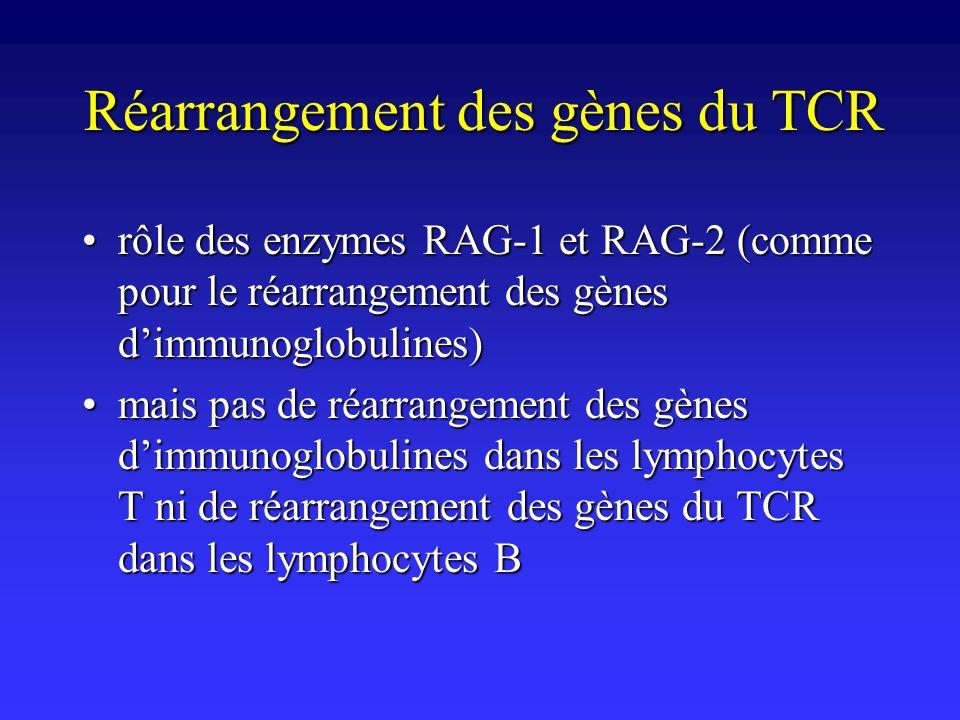 rôle des enzymes RAG-1 et RAG-2 (comme pour le réarrangement des gènes dimmunoglobulines)rôle des enzymes RAG-1 et RAG-2 (comme pour le réarrangement