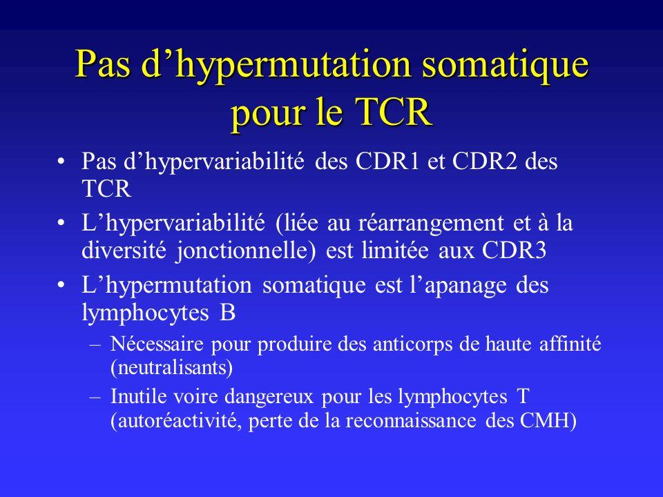 Pas dhypermutation somatique pour le TCR Pas dhypervariabilité des CDR1 et CDR2 des TCR Lhypervariabilité (liée au réarrangement et à la diversité jon