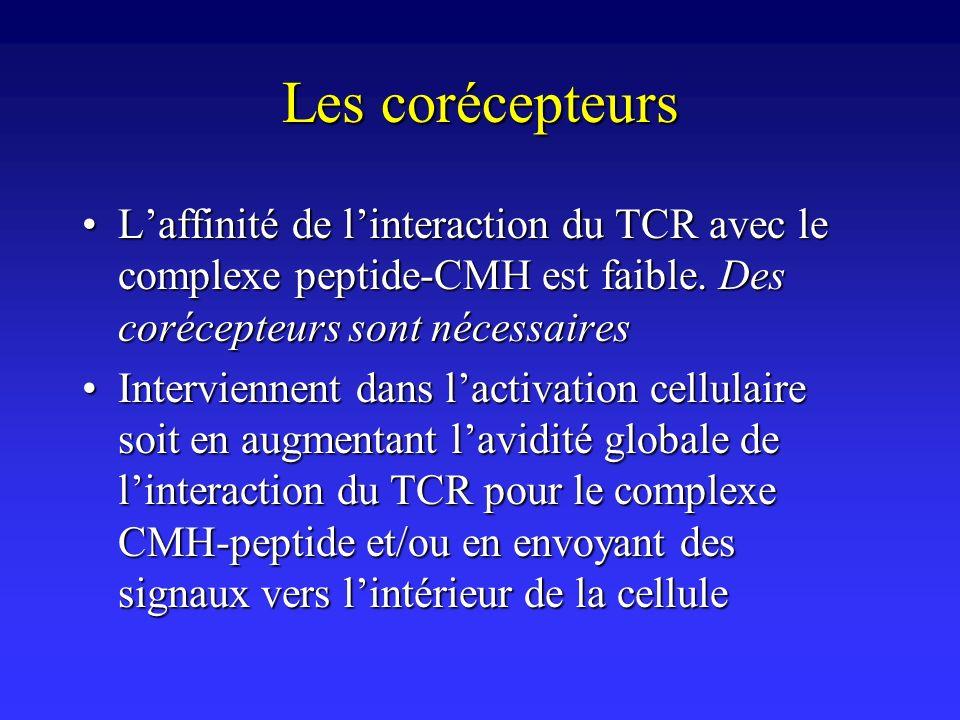 Les corécepteurs Laffinité de linteraction du TCR avec le complexe peptide-CMH est faible. Des corécepteurs sont nécessairesLaffinité de linteraction