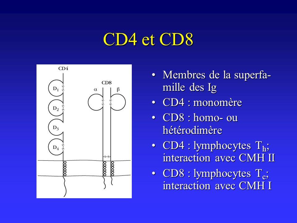 CD4 et CD8 Membres de la superfa- mille des IgMembres de la superfa- mille des Ig CD4 : monomèreCD4 : monomère CD8 : homo- ou hétérodimèreCD8 : homo-