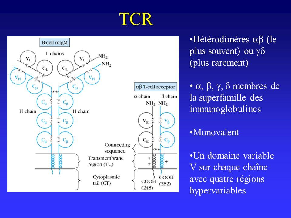 TCR Hétérodimères (le plus souvent) ou plus rarement) membres de la superfamille des immunoglobulines Monovalent Un domaine variable V sur chaque chaî
