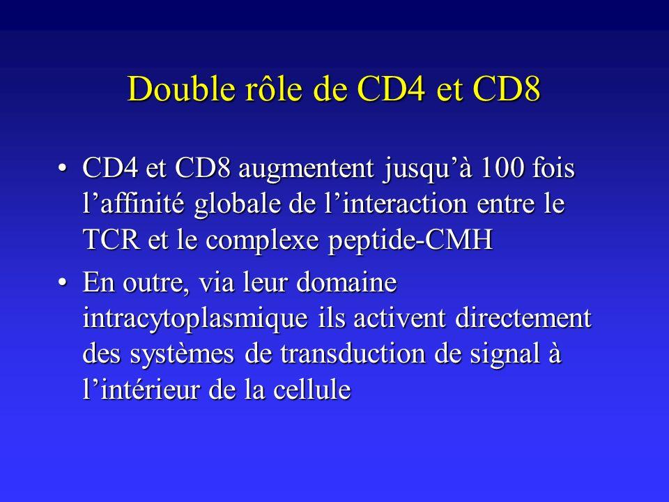 Double rôle de CD4 et CD8 CD4 et CD8 augmentent jusquà 100 fois laffinité globale de linteraction entre le TCR et le complexe peptide-CMHCD4 et CD8 au