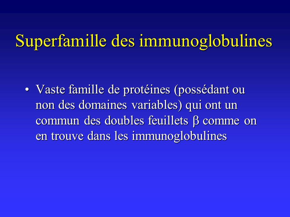 Superfamille des immunoglobulines Vaste famille de protéines (possédant ou non des domaines variables) qui ont un commun des doubles feuillets comme o