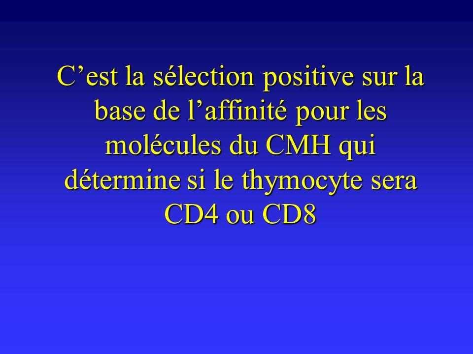 Cest la sélection positive sur la base de laffinité pour les molécules du CMH qui détermine si le thymocyte sera CD4 ou CD8