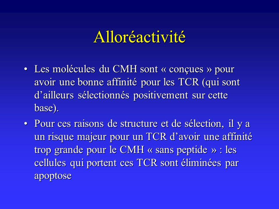 Alloréactivité Les molécules du CMH sont « conçues » pour avoir une bonne affinité pour les TCR (qui sont dailleurs sélectionnés positivement sur cett