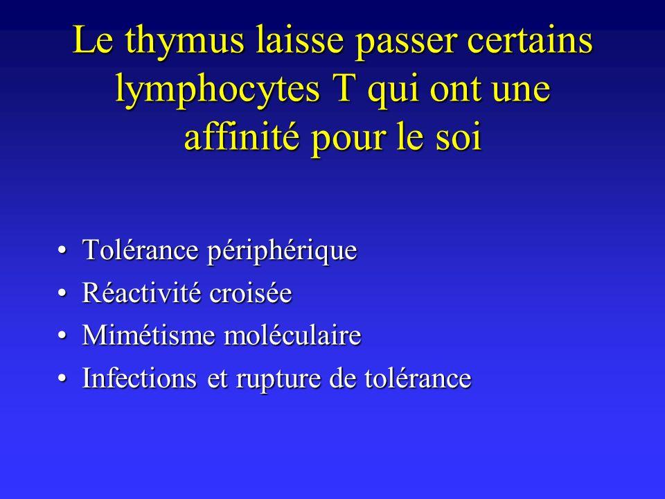 Le thymus laisse passer certains lymphocytes T qui ont une affinité pour le soi Tolérance périphériqueTolérance périphérique Réactivité croiséeRéactiv
