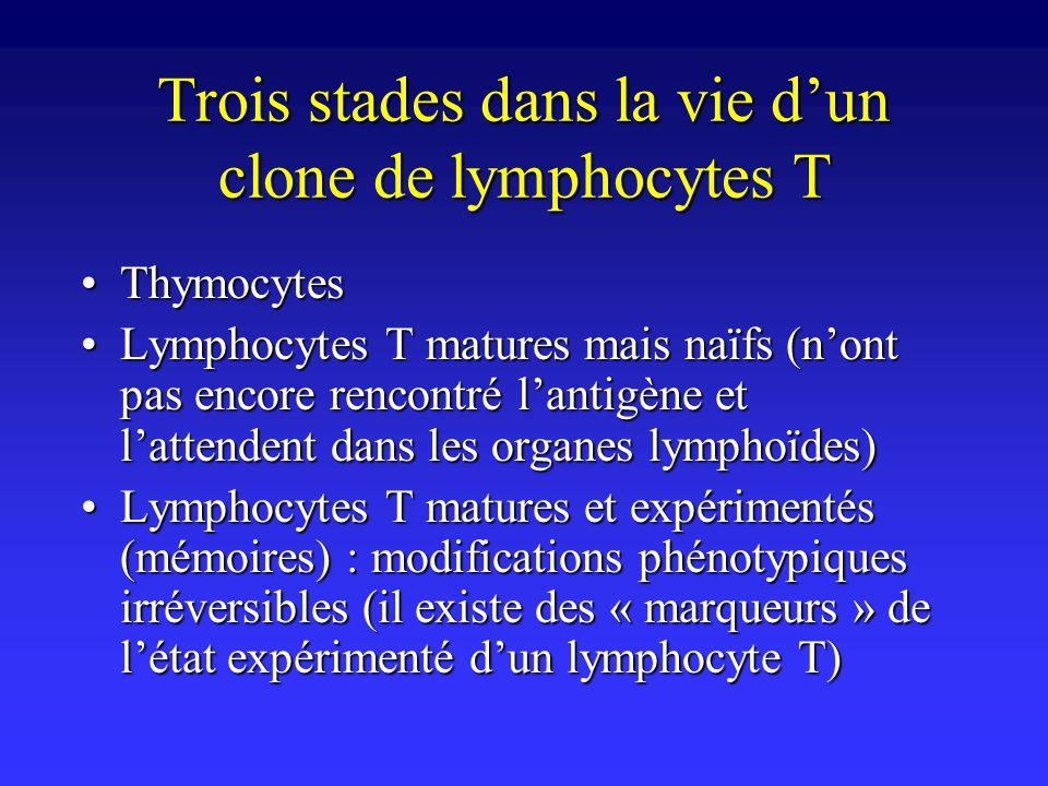 Trois stades dans la vie dun clone de lymphocytes T ThymocytesThymocytes Lymphocytes T matures mais naïfs (nont pas encore rencontré lantigène et latt