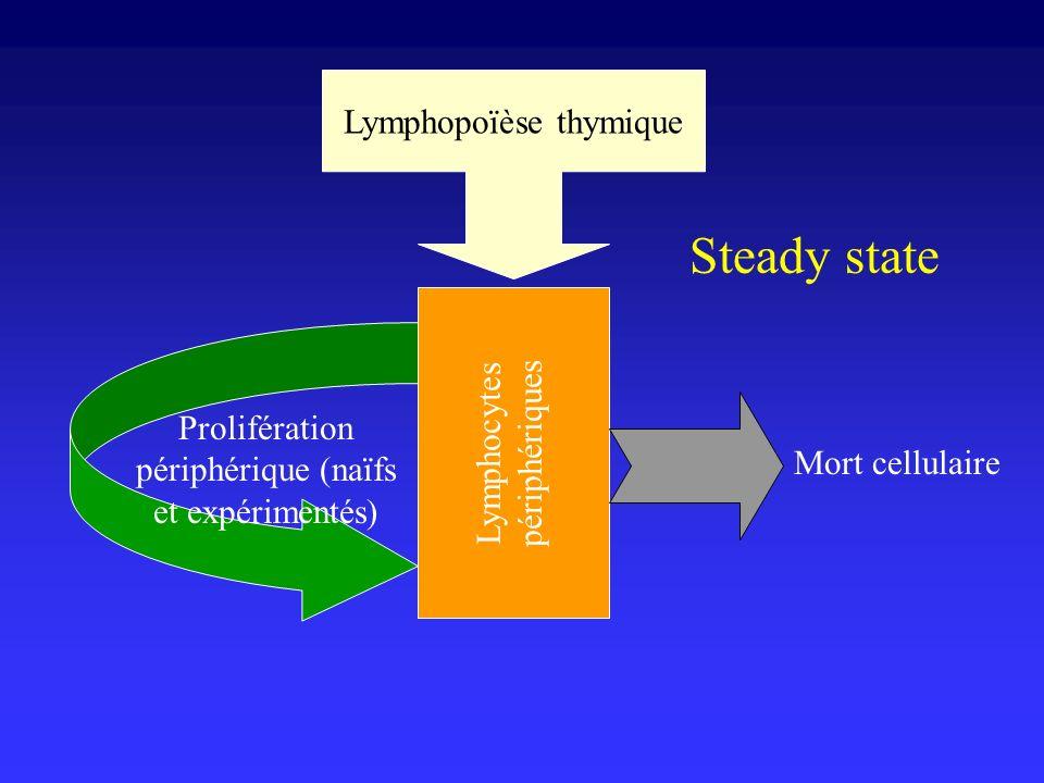 Mort cellulaire Prolifération périphérique (naïfs et expérimentés) Lymphopoïèse thymique Lymphocytes périphériques Steady state