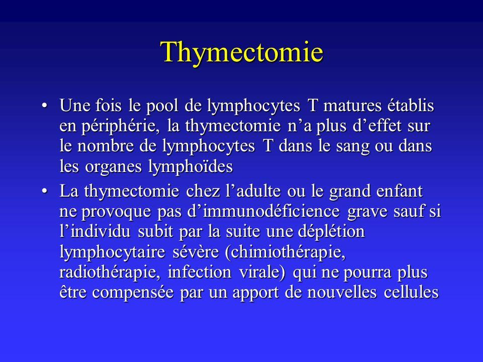 Thymectomie Une fois le pool de lymphocytes T matures établis en périphérie, la thymectomie na plus deffet sur le nombre de lymphocytes T dans le sang