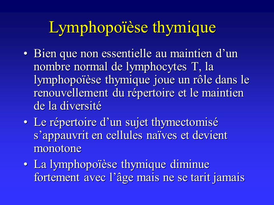 Lymphopoïèse thymique Bien que non essentielle au maintien dun nombre normal de lymphocytes T, la lymphopoïèse thymique joue un rôle dans le renouvell