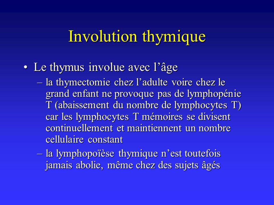 Involution thymique Le thymus involue avec lâgeLe thymus involue avec lâge –la thymectomie chez ladulte voire chez le grand enfant ne provoque pas de