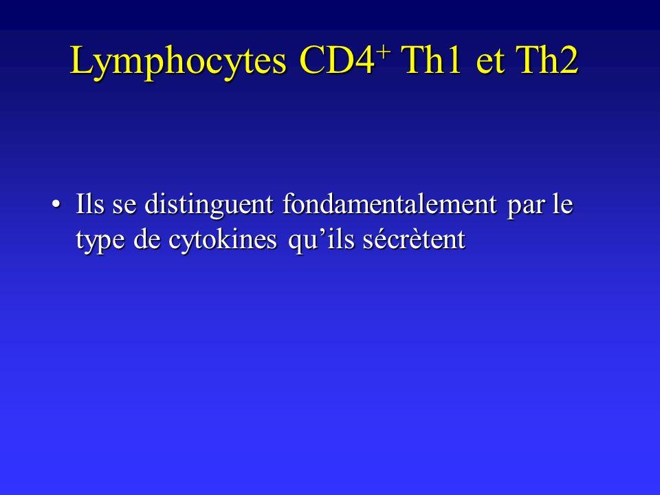 Lymphocytes CD4 + Th1 et Th2 Ils se distinguent fondamentalement par le type de cytokines quils sécrètentIls se distinguent fondamentalement par le ty