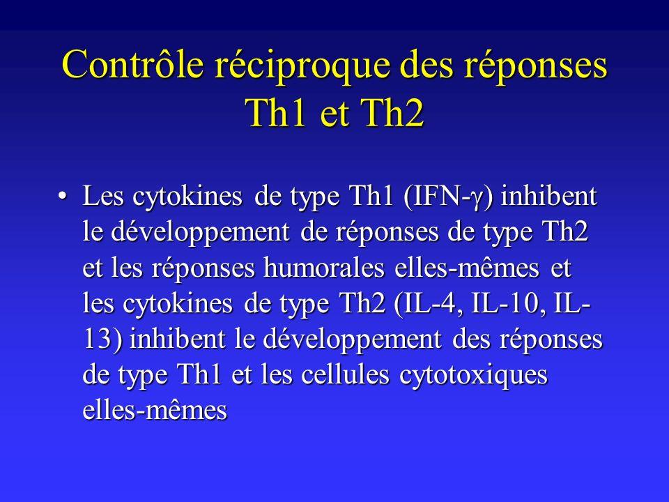 Contrôle réciproque des réponses Th1 et Th2 Les cytokines de type Th1 (IFN- ) inhibent le développement de réponses de type Th2 et les réponses humora