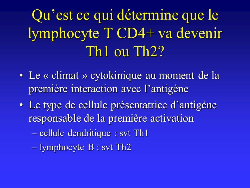 Quest ce qui détermine que le lymphocyte T CD4+ va devenir Th1 ou Th2? Le « climat » cytokinique au moment de la première interaction avec lantigèneLe