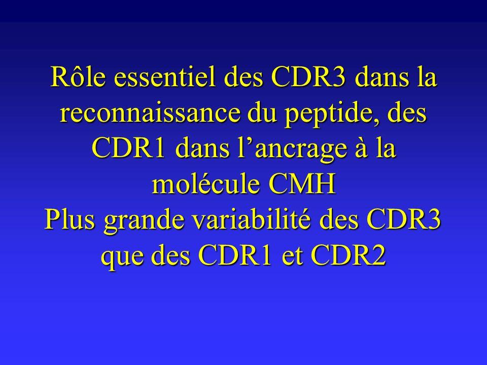 Rôle essentiel des CDR3 dans la reconnaissance du peptide, des CDR1 dans lancrage à la molécule CMH Plus grande variabilité des CDR3 que des CDR1 et C