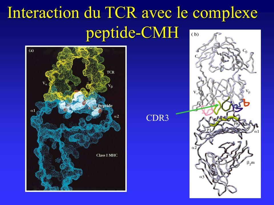 Les corécepteurs Laffinité de linteraction du TCR avec le complexe peptide-CMH est faible.