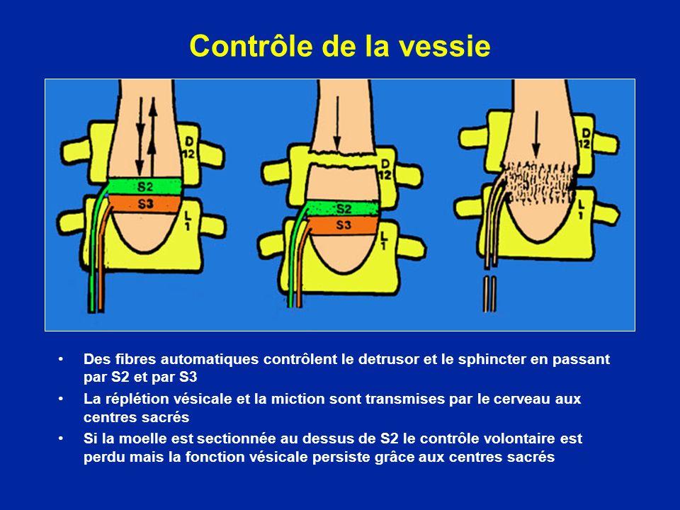 Contrôle de la vessie Des fibres automatiques contrôlent le detrusor et le sphincter en passant par S2 et par S3 La réplétion vésicale et la miction s