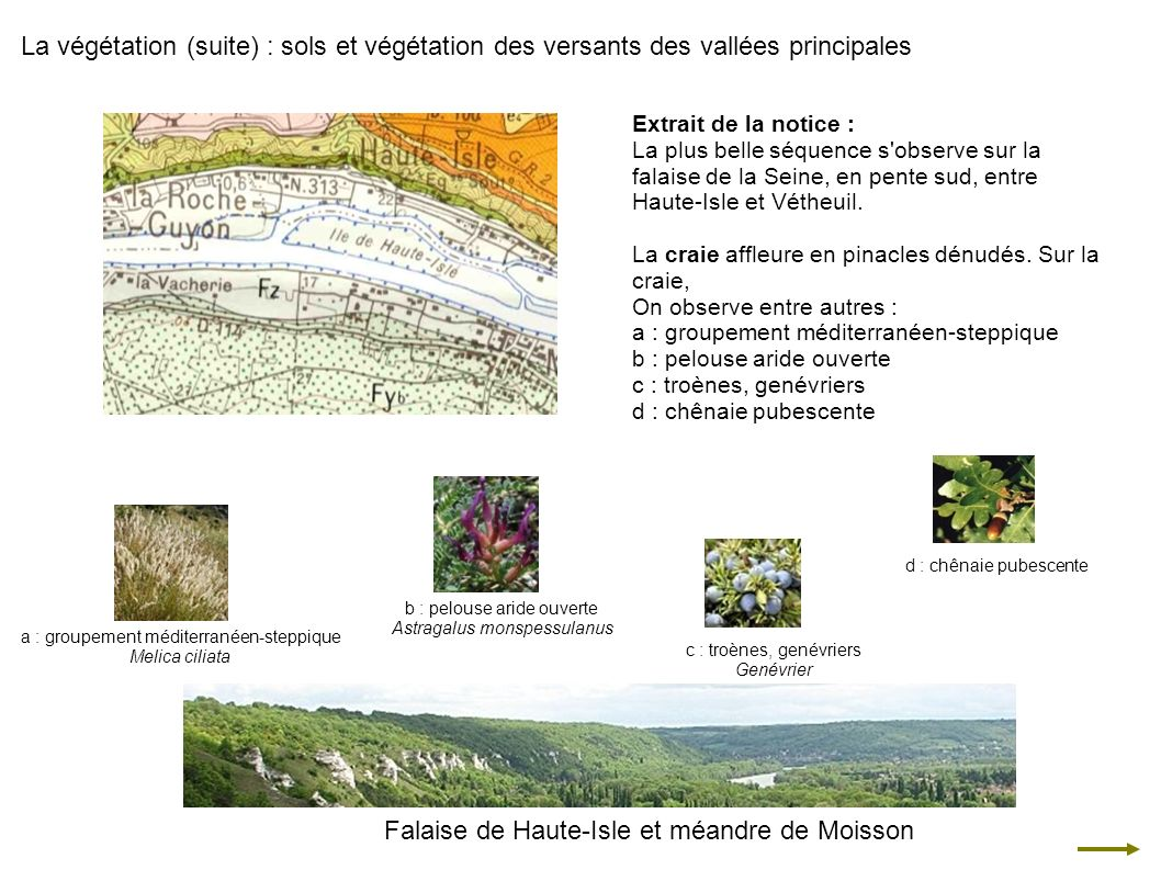 La végétation (suite) : sols et végétation des versants des vallées principales Extrait de la notice : La plus belle séquence s'observe sur la falaise