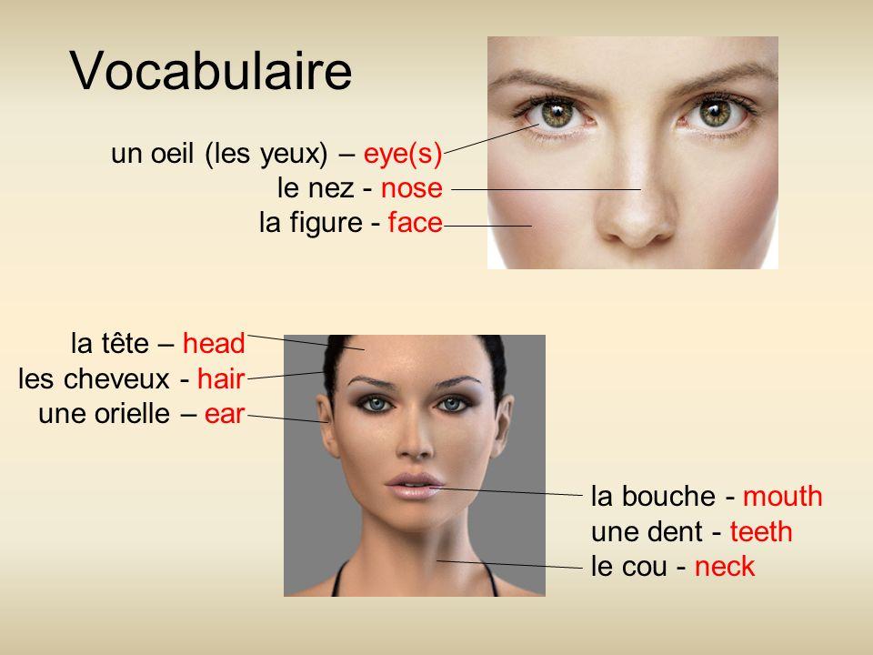 Vocabulaire un oeil (les yeux) – eye(s) le nez - nose la figure - face la tête – head les cheveux - hair une orielle – ear la bouche - mouth une dent