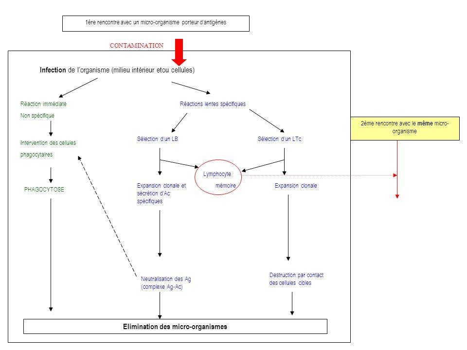 1ère rencontre avec un micro-organisme porteur dantigènes CONTAMINATION Infection de lorganisme (milieu intérieur etou cellules) Réaction immédiate Non spécifique Intervention des cellules phagocytaires PHAGOCYTOSE Elimination des micro-organismes Réactions lentes spécifiques Sélection dun LB Expansion clonale et sécrétion dAc spécifiques Neutralisation des Ag (complexe Ag-Ac) Lymphocyte mémoire Sélection dun LTc Expansion clonale Destruction par contact des cellules cibles 2ème rencontre avec le même micro- organisme