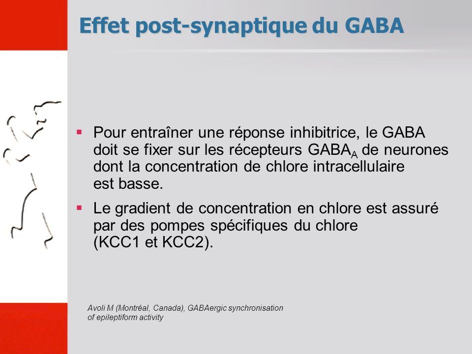 Pour entraîner une réponse inhibitrice, le GABA doit se fixer sur les récepteurs GABA A de neurones dont la concentration de chlore intracellulaire es