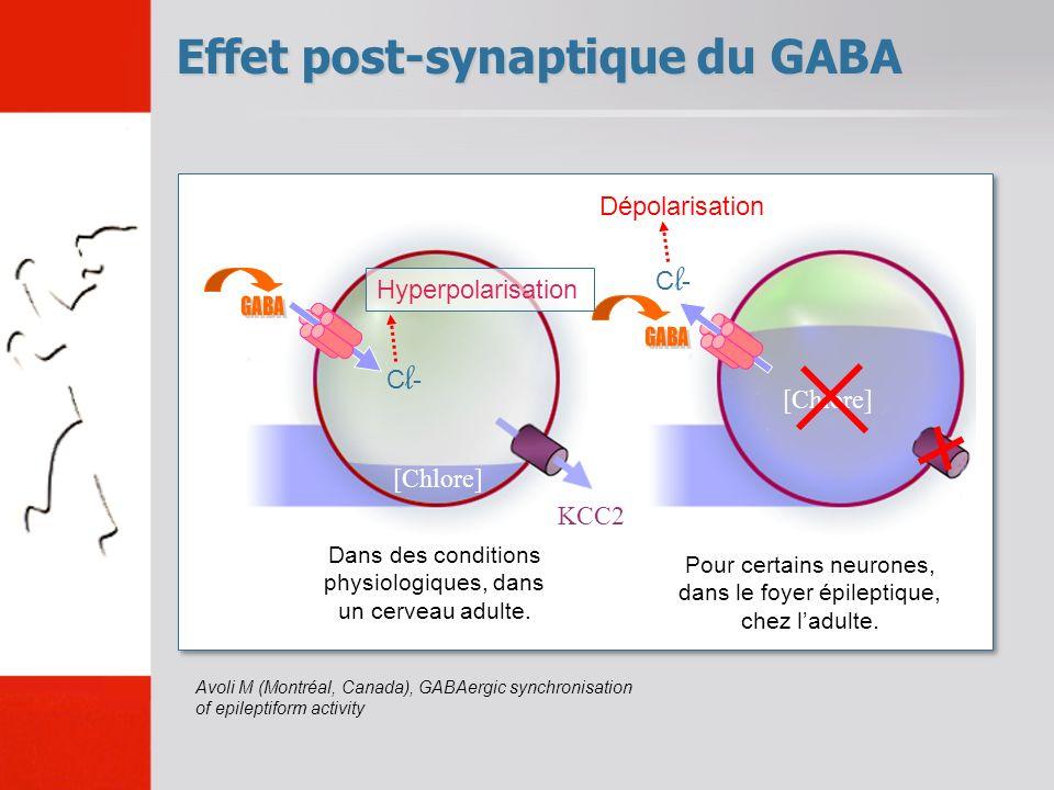 Effet post-synaptique du GABA Dans des conditions physiologiques, dans un cerveau adulte. [Chlore] KCC2 Cl-Cl- Hyperpolarisation Dépolarisation Pour c