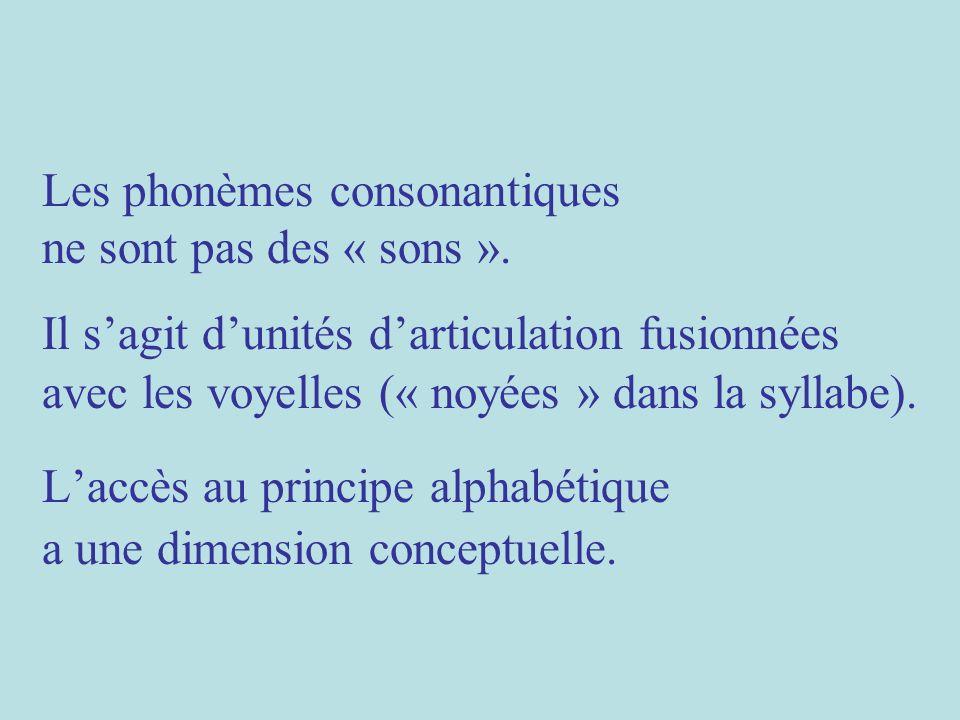 Les phonèmes consonantiques ne sont pas des « sons ». Il sagit dunités darticulation fusionnées avec les voyelles (« noyées » dans la syllabe). Laccès