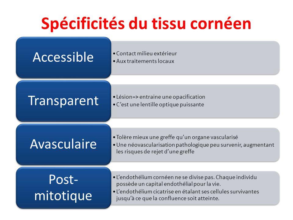 Spécificités du tissu cornéen Contact milieu extérieur Aux traitements locaux Accessible Lésion=> entraine une opacification Cest une lentille optique