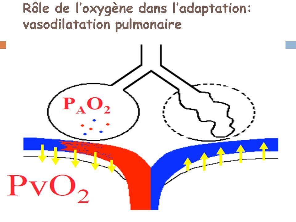 Rôle de loxygène dans ladaptation: vasodilatation pulmonaire