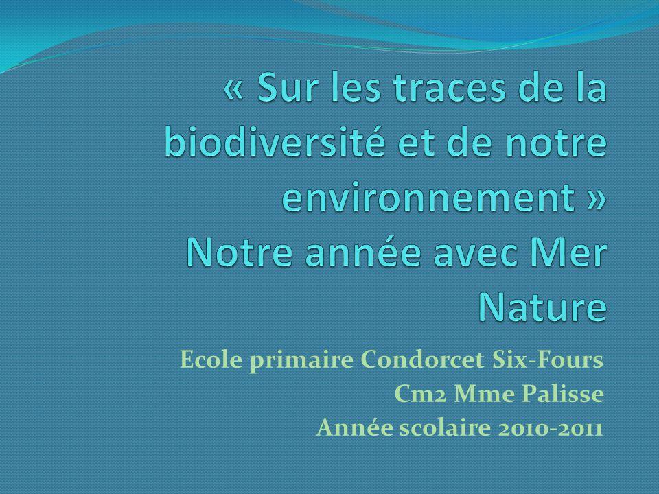 Ecole primaire Condorcet Six-Fours Cm2 Mme Palisse Année scolaire 2010-2011