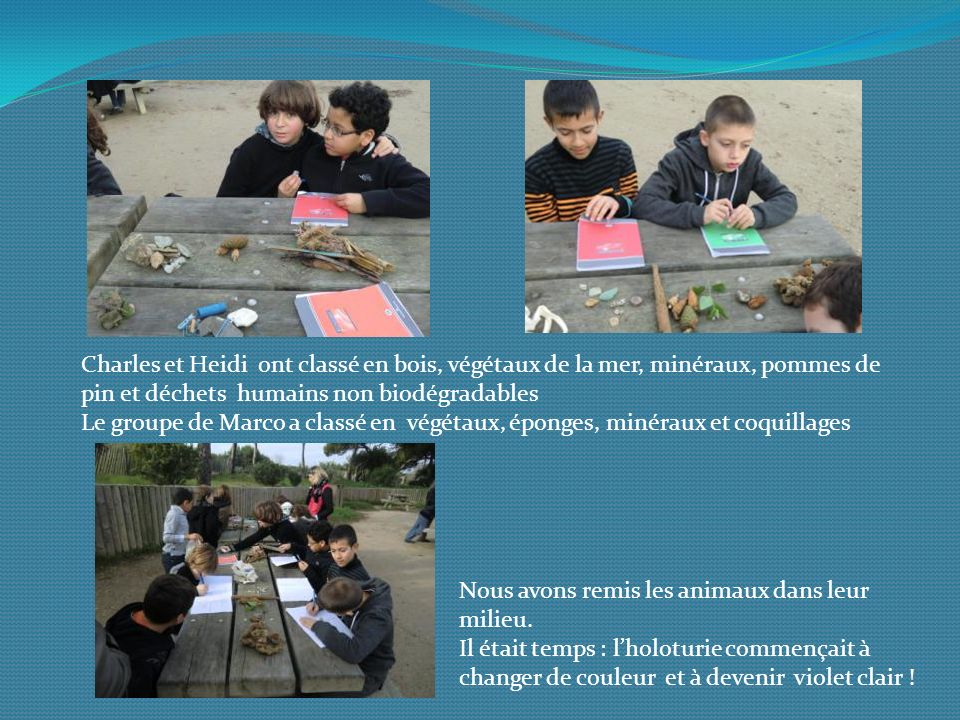 Charles et Heidi ont classé en bois, végétaux de la mer, minéraux, pommes de pin et déchets humains non biodégradables Le groupe de Marco a classé en