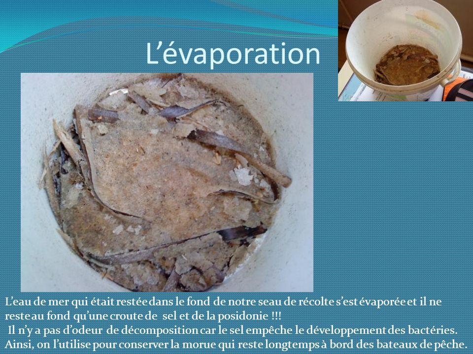 Lévaporation Leau de mer qui était restée dans le fond de notre seau de récolte sest évaporée et il ne reste au fond quune croute de sel et de la posi