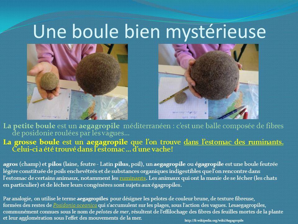 Une boule bien mystérieuse La petite boule est un aegagropile méditerranéen : cest une balle composée de fibres de posidonie roulées par les vagues… L