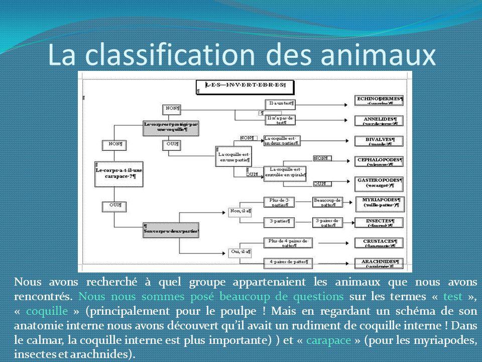 La classification des animaux Nous avons recherché à quel groupe appartenaient les animaux que nous avons rencontrés. Nous nous sommes posé beaucoup d