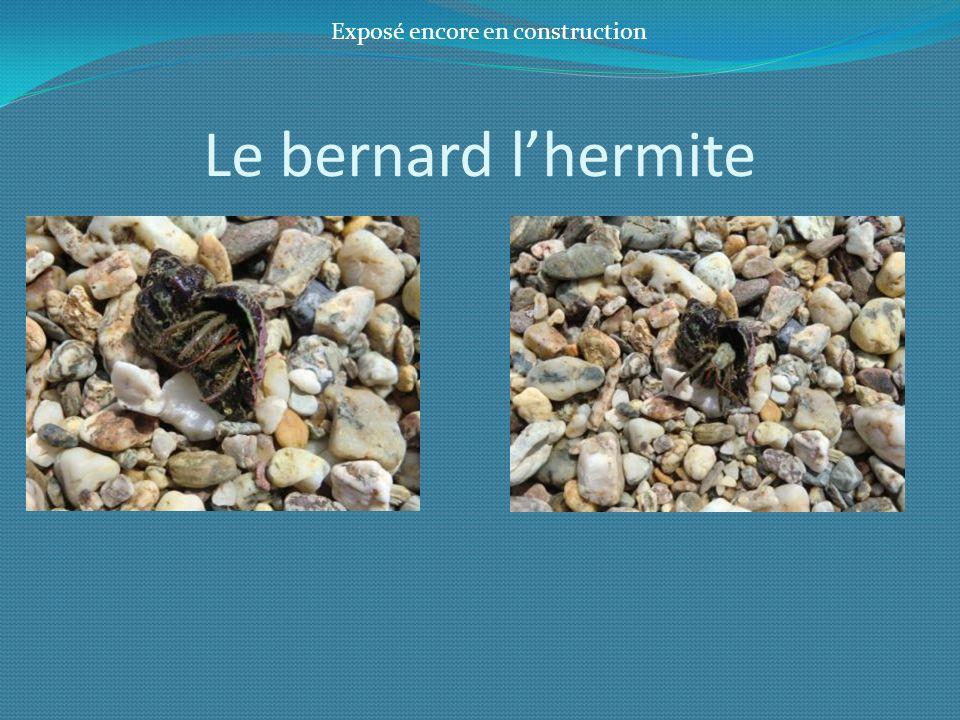 Le bernard lhermite Exposé encore en construction