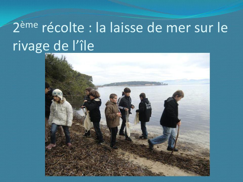 2 ème récolte : la laisse de mer sur le rivage de lîle