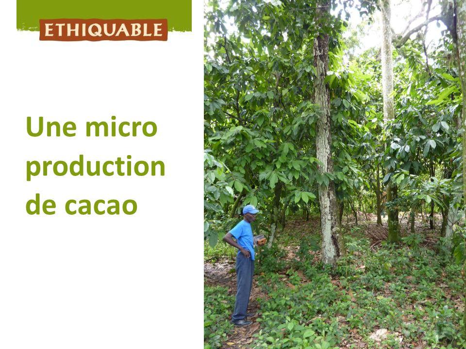 Une micro production de cacao