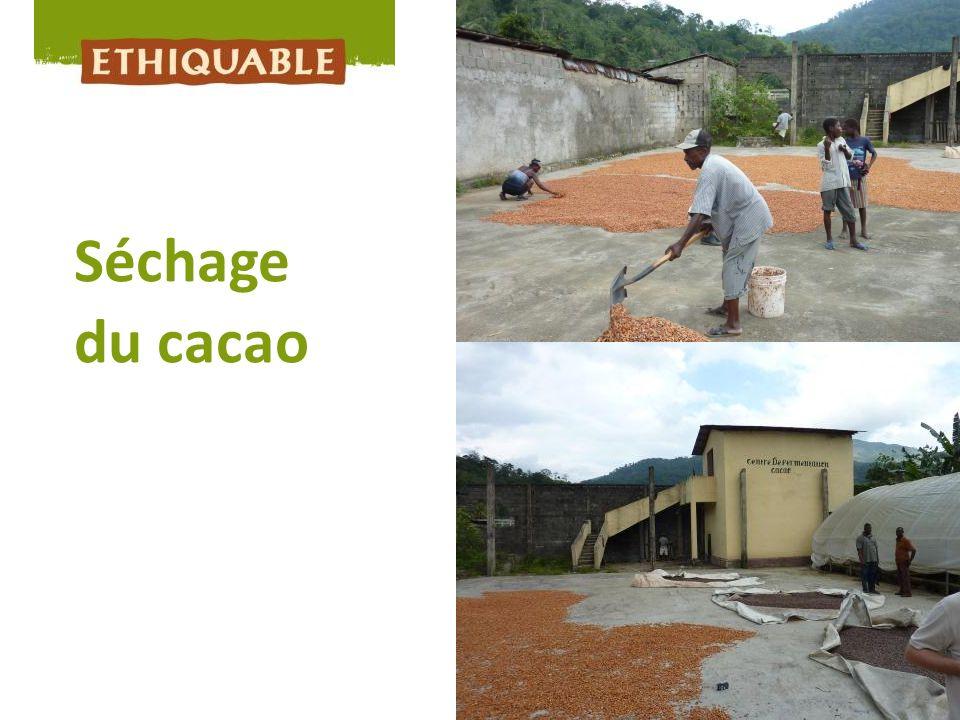 Séchage du cacao