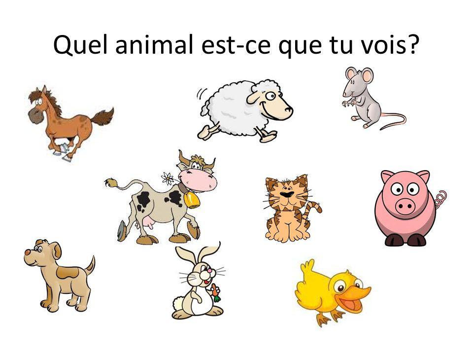 Quel animal est-ce que tu vois?