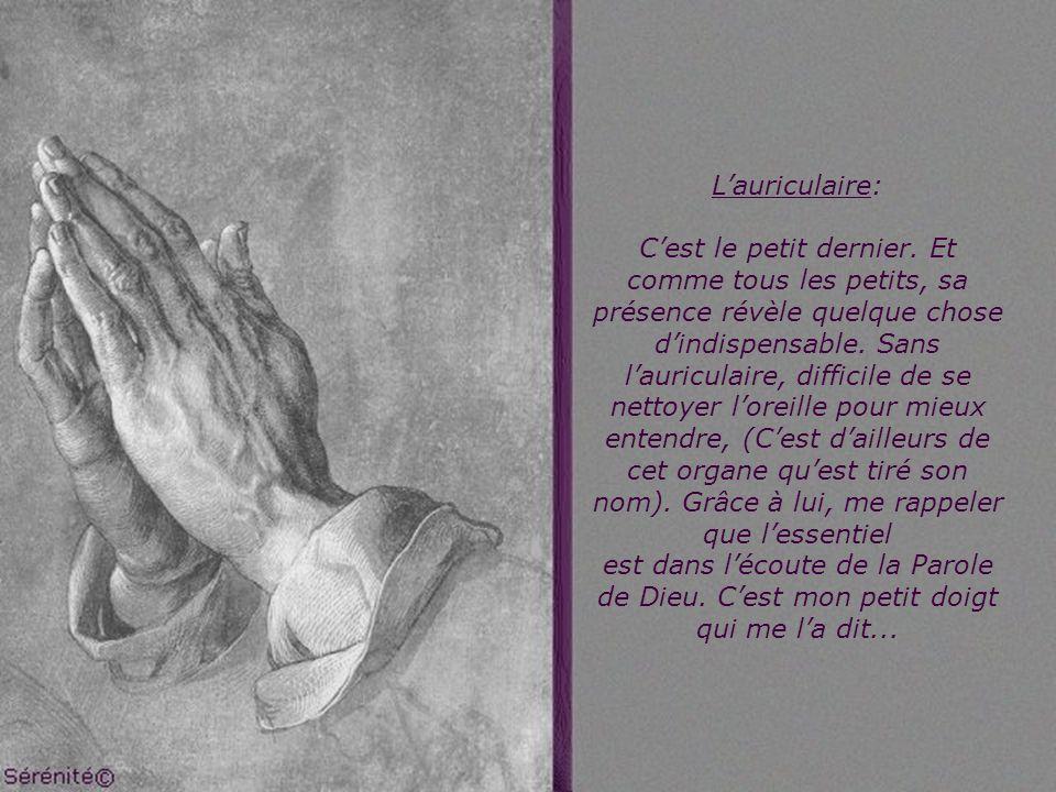 Lannuaire : Comme son nom lindique, lannulaire reçoit lanneau, Lalliance, que lon porte au doigt. Il est tout proche du majeur, presque aussi grand. A