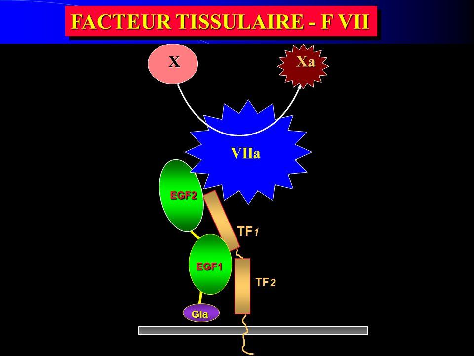 FACTEUR TISSULAIRE - F VII TF 2 TF 1 EGF1 Gla EGF2 Domainecatalytique du FVII VIIa X Xa