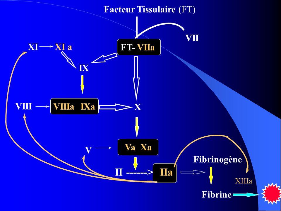 VII FT- VIIa X II ------> IIa Va Xa V XI XI a IX VIIIa IXa VIII Fibrinogène Fibrine XIIIa Facteur Tissulaire (FT) VII FT- VIIa
