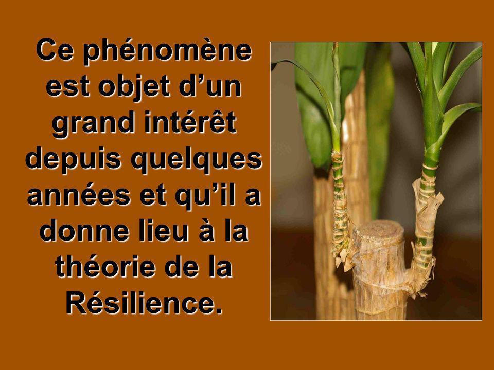 Ce phénomène est objet dun grand intérêt depuis quelques années et quil a donne lieu à la théorie de la Résilience.