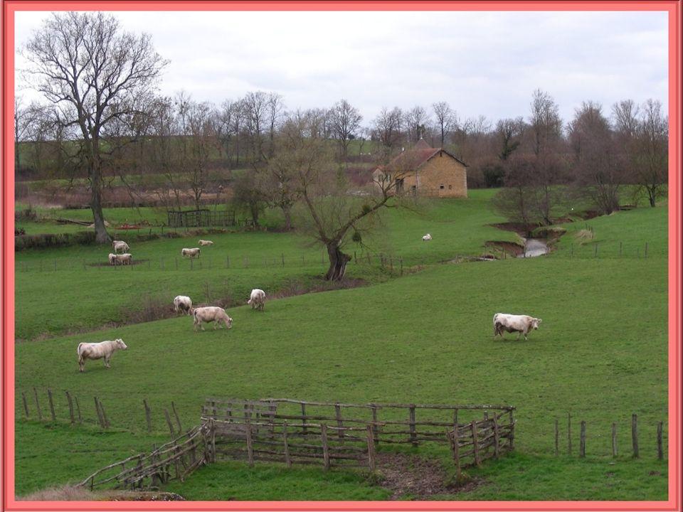 Lorigine de cette petite ville remonte à la Gaule indépendante et elle passa aussi, durant une courte période, aux Rois dEspagne au IVe siècle… Capita
