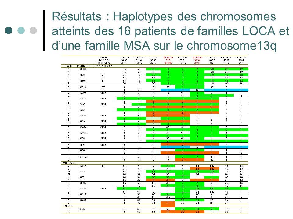 Résultats : Haplotypes des chromosomes atteints des 16 patients de familles LOCA et dune famille MSA sur le chromosome13q