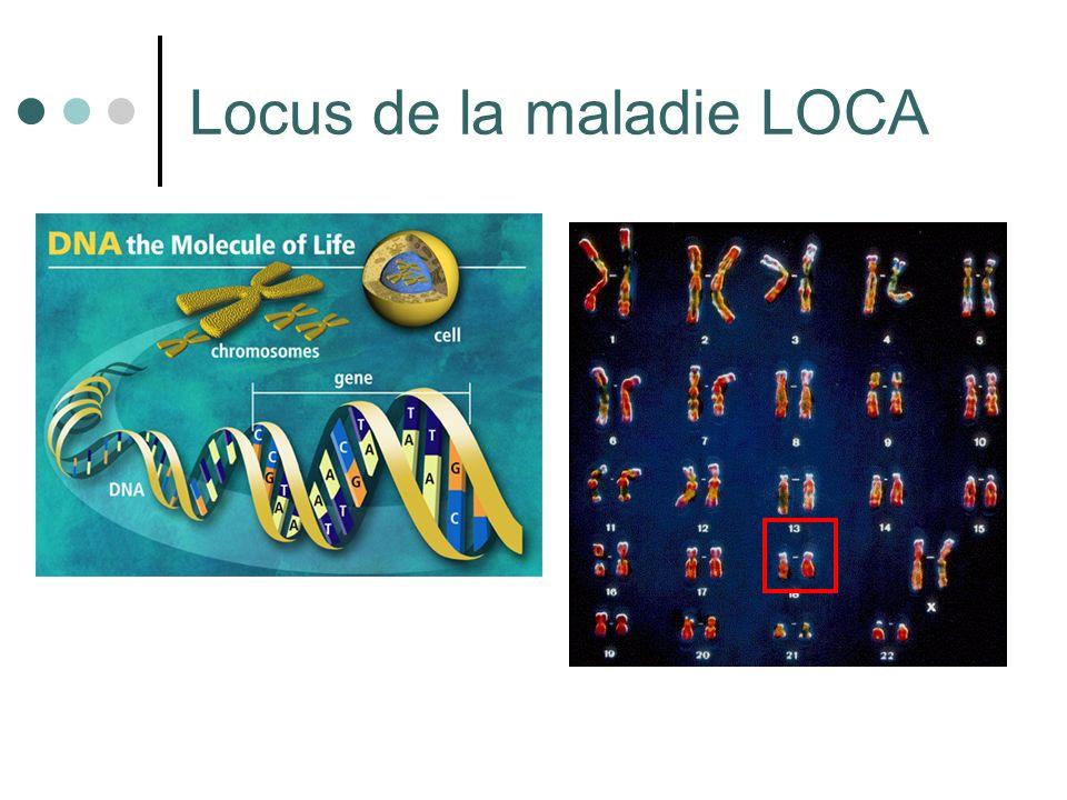Locus de la maladie LOCA